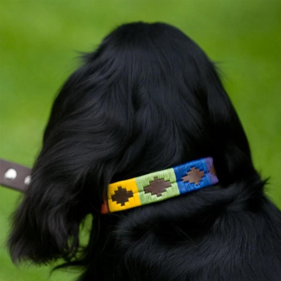 Pioneros Rainbow Dog Collar Multicolour