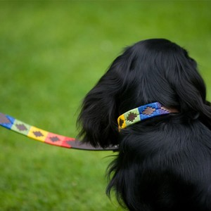Pioneros Rainbow Dog Lead Multicolour