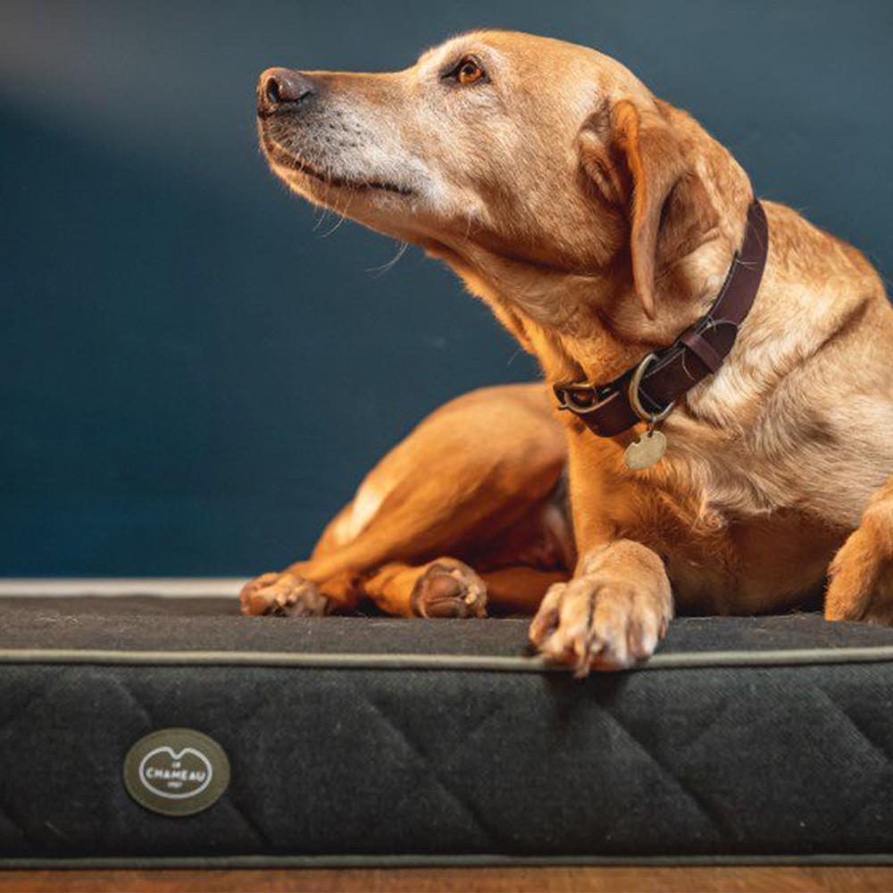 Le Chameau Cushion Dog Bed Vert Chameau